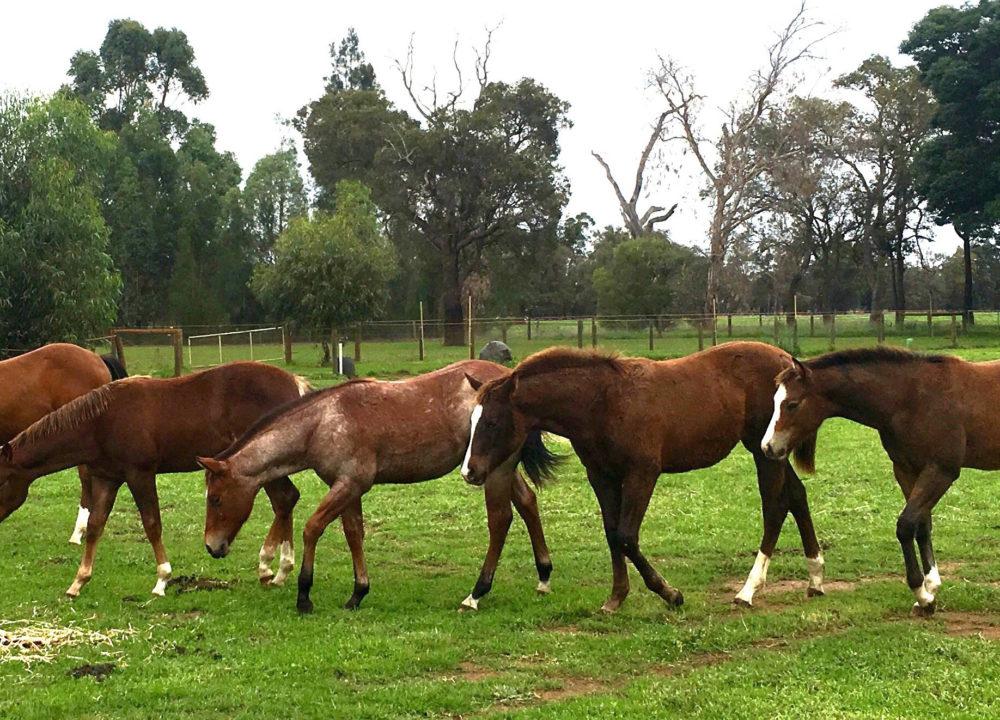 Duck Pool Farm - Horse Breeding Enterprise